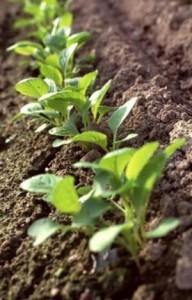 Питательные вещества и удобрения