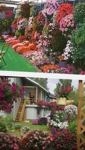 ампельные цветы украшение