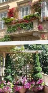 озеленение лоджии и балкона