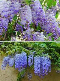 Виды многолетних цветов и растений