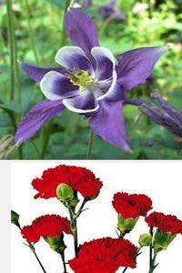растения для цветника
