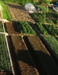как обустроить грядки на огороде