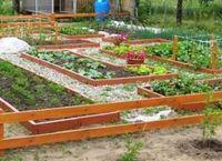 соль, сода и уксус на страже огорода