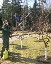 чем опрыскивают деревья