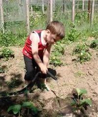 как правильно поливать клубнику