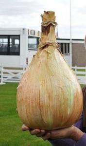 как вырастить гигантский лук