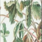 болезнь растений вертициллезное увядание