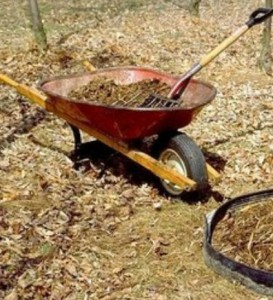 Чем мульчировать почву