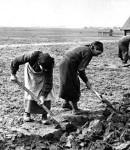Какая лучше почва на огороде