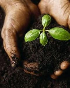почва для рассады помидора