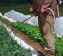 как бороться с вредителями огорода