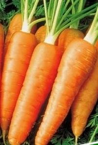 сбор и хранение моркови