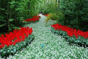 Голландский сад дизайн