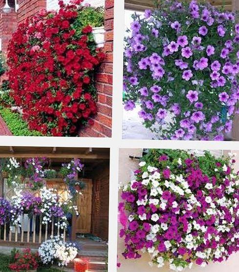 Ампельные цветы во саду и в огороде.