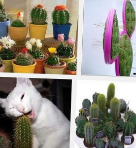 как вырастить кактус
