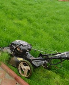 уход за газонной травой