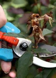 как обрезать комнатные растения