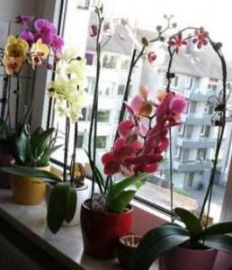 правильное выращивание орхидеи