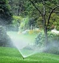 как поливать газонную траву