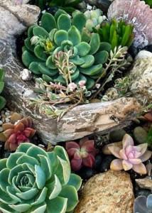 Растения в рутарии