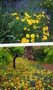 растения для мавританского газона