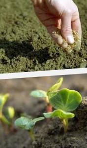как сажать осенью семена
