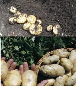 анализ результатов урожая