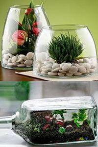 сад в стеклянной емкости