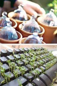 как стратифицировать семена