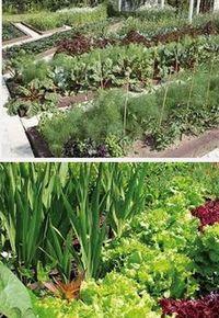 какие овощи хорошо растут вместе