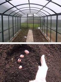 как приготовить почву под теплицу