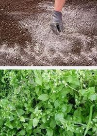 кислотность почвы, как бороться