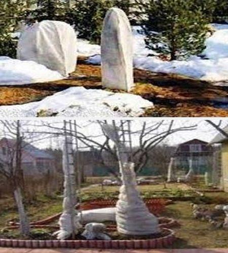 защита плодовых деревьев от холода