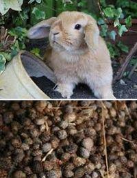 как применять кроличий помет