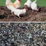 как применять птичий помет