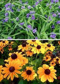 цветы для рабаток