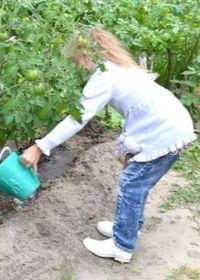 правила полива овощей