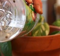 полив комнатных цветов - какую воду использовать