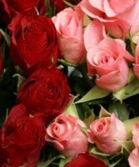 сорта роз для теплиц