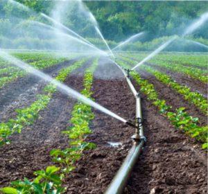 как поливать клубнику