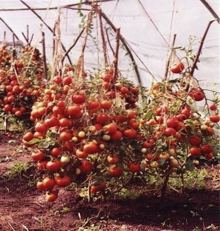 чем лучше подкормить помидоры
