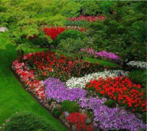 цветник непрерывного цветения