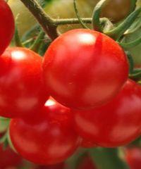 хорошая подкормка для помидоров
