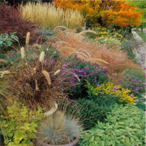Декоративные травы многолетние - обзор