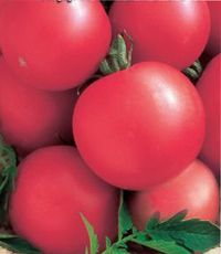 помидоры розовые описание