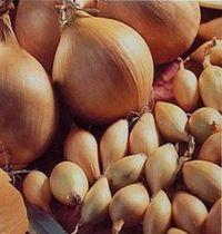 лучшие сорта лука севка
