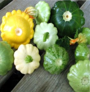 выращивание патиссон