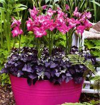 выращивание цветов в контейнерах