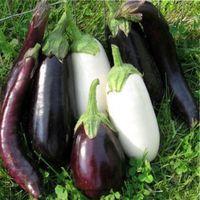 . Как подкармливать рассаду и взрослые растения