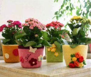 красивые домашние цветы в горшках